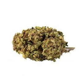 GREEN CARPATHES CORP STRAWBERRY 10G